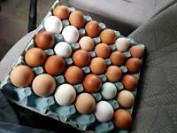 Fresh free range eating eggs