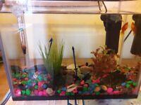 Aquarium with 2 little golden fish