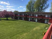1 bed flat looking for 1 nice tenant