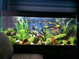 5 foot fish tank aquarium