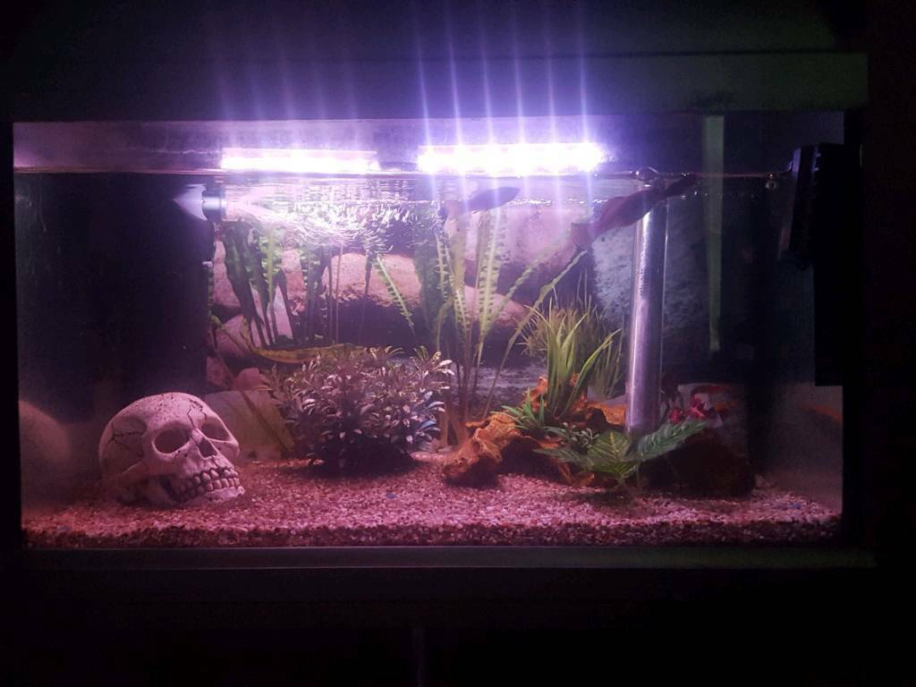 Tropical Fish Tank Full Set Up And Stand