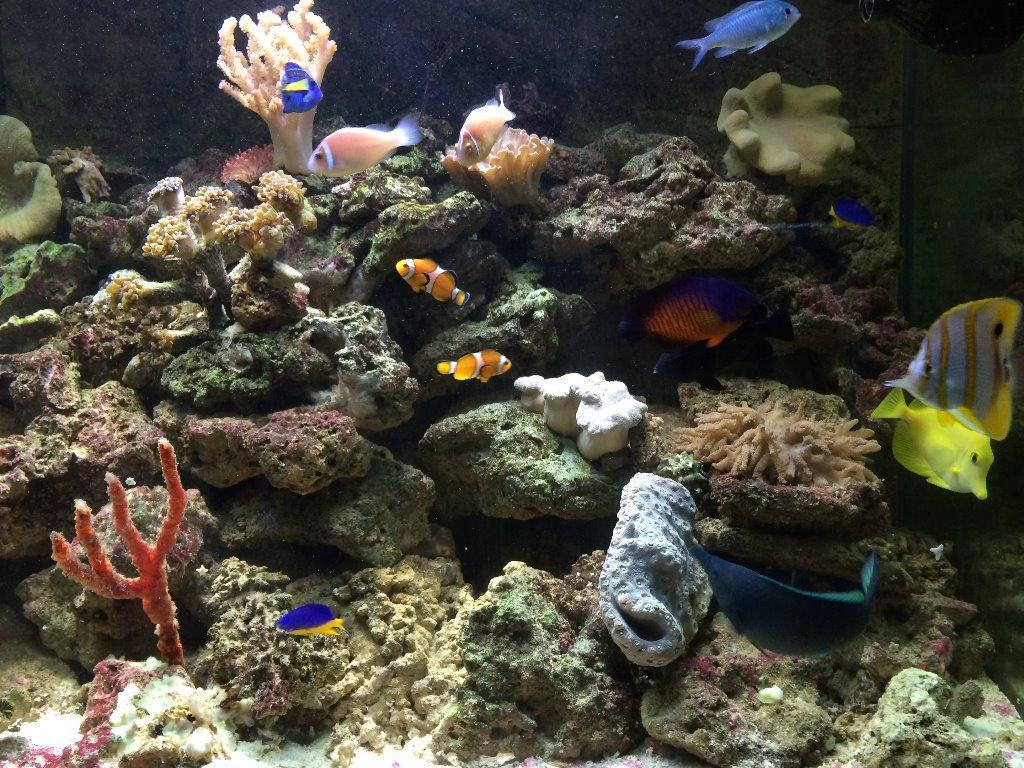 Complete marine set up for sale fish corals live rock for Live saltwater fish for sale