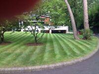 Experienced Gardener, Poole, Bournemouth, Christchurch. All aspects of gardening undertaken.