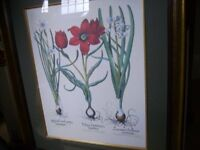 Stunning beautifully framed large print - very expensive when bought - red flower picture - perfect