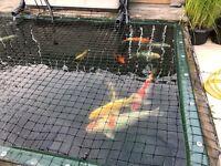 Garden Fish Pond