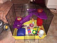 Hamster cage, hamster (Boy) & assessors