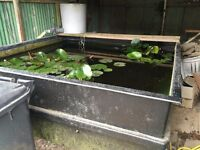 Fibreglass quarantine tank with bottom drain