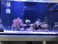 Redsea 250ltr tank 7 months old still in warranty all running with sump lights no fish included