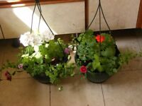 2 MATCHING HANGING BASKETS FOR SALE.