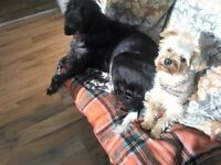 Reliable, kindly, dog minder required for 2 well-behaved female dogs