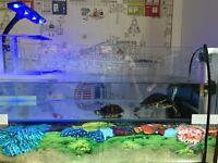 2 Turtles, Tank, Light, Filter, Heater.