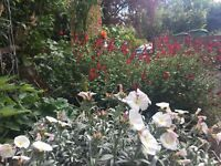 Professional Gardening Services NW3, NW6, NW8, NW11, N2, N3, W1, W10, W11 and beyond...