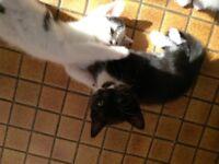 Kittens cute White black mixed CHEAP