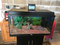 125l Juwel fish tank full set up with stand filter heater 2 x light gravel ornament all work in pic