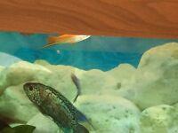15 Fish in Total