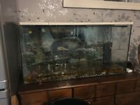 3ft fish tank ,pump /filter LED light air disc .extra pump .gold fish available .