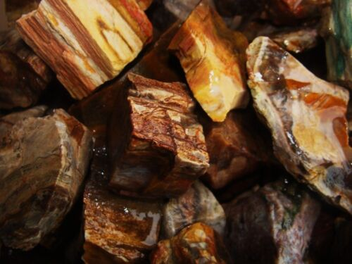 2000 Carat Lots of Unsearched Petrified Wood + a Free Faceted Gemstone