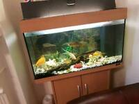 Big fish tank only £240 !!! Including fishes and flirtation pump