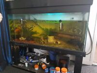 Tropical fish tank complete with all fish, ornaments, food, 2 pumps/filters