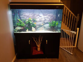 Fish Tank - FULL SETUP - 4ft