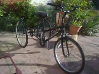 """TRICYCLE ADULT 26"""" WHEELS : FALCON"""