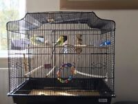 Large Bird Cage With Extras - Price Reduced