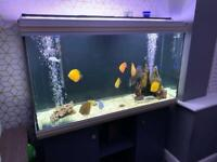 Ultimate full fish tank set up!! 10 discus fish/ Full Tropical Freshwater Tank set up + SPECIAL FOOD
