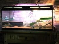 3 ft tanks and 2 terrapins £100 Ono