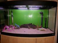 Fluval 180liter bow fronted fish tank and Stand For Sale full set up