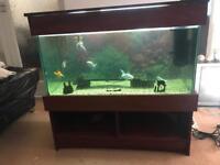 Fish tank/ aquarium - complete with fish