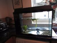 Large Fish Tank For Sale £25.00 (Approx 60 cm wide, depth 28cm, height 35cm)
