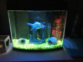 14litre fish tank, light and filter included. Immaculate condition.