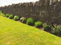 Experienced Local Gardener offering Garden Maintanence to suit your needs