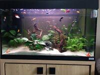 125L Fish Tank Very Good Condition Still Lots Of Life Left
