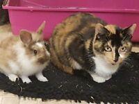 3 baby rabbits for sale boys lionhead rex cross indoor raised