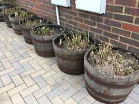 Barrels,oak,seasoned,Whisky half barrel planters
