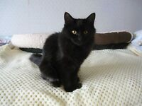 Cecille, (7 month old kitten) seeks a loving home