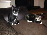 Two Kittens Need Rehoming