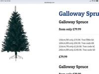 Galloway spruce