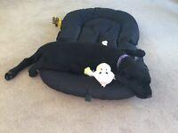 KC Reg Labrador Puppy