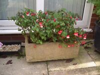 Long stone/concrete trough planter containing red and white hardy fuschia