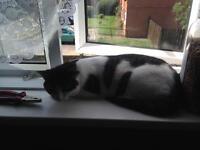 4 year old neutered female cat