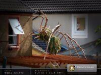 Wooden Spiky Spider Sculpture Gigantic Garden Sculpture Recycled Conifer Tree Wood Animal