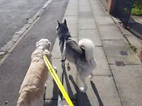 Liverpool dog walking and dog sitting