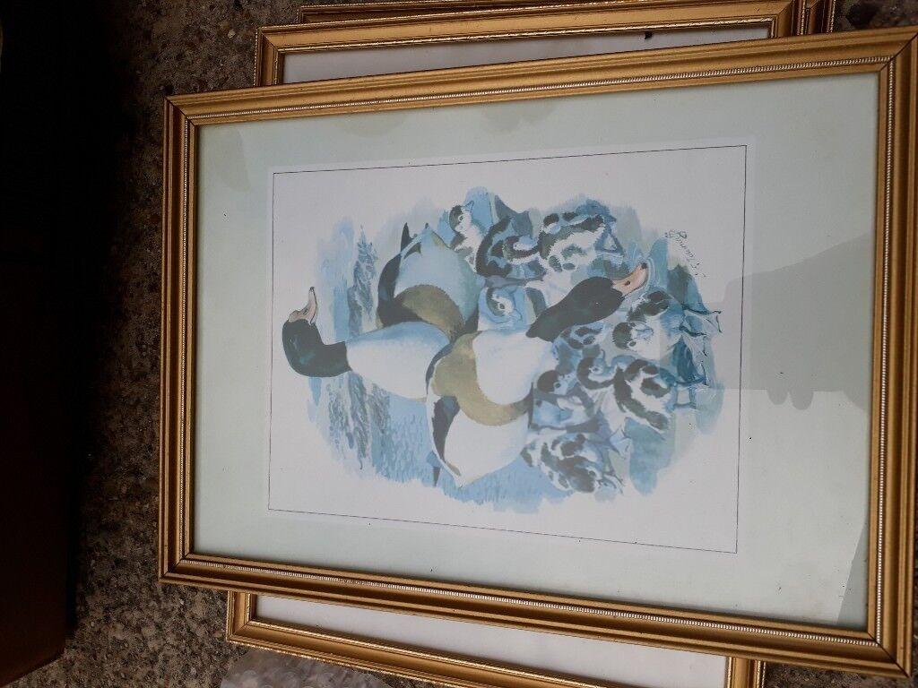 Ducks bird framed picture.