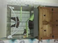 2 male dumbo rats and cage for sale