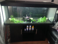 Juwel Rio 400 Fish Tank including Fluval FX6 filter and other bits.