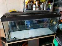 Roma 240 tank and black cabinet