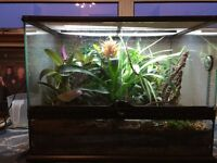 Naturally Planted Exo Terra Vivarium