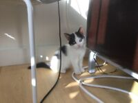 Kitten looking for a loving home with outdoor space